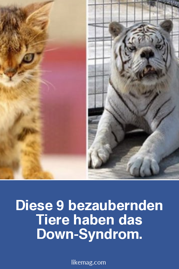 tiere mit downsyndrom