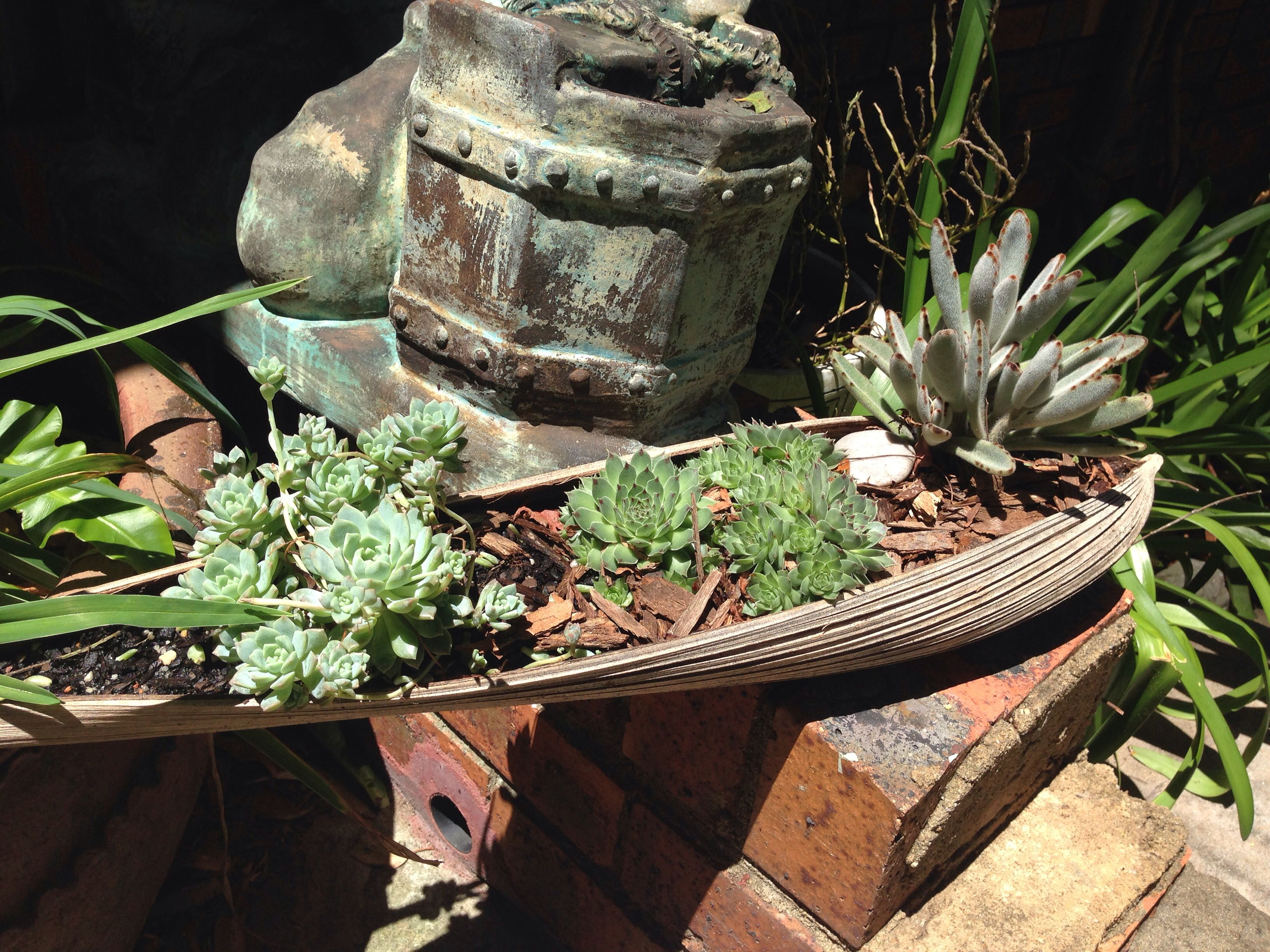 Succulents Growing In A Palm Tree Bark I Have Plenty Of These Falling Off In My Garden Rock Garden Landscaping Succulents Palm Frond Art