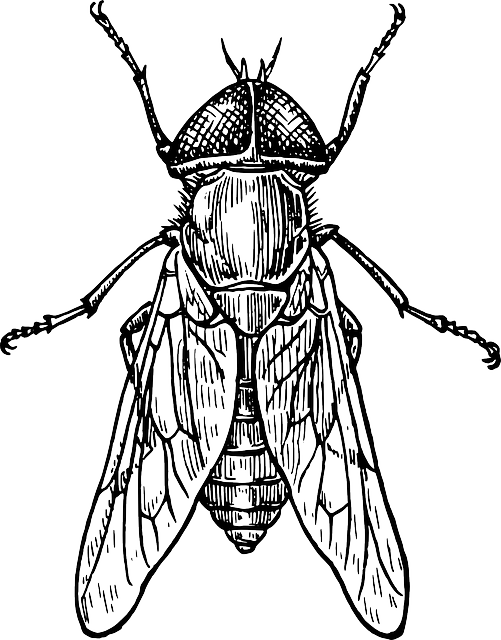 Free Image On Pixabay Fly Bug Wings Insect Gadfly Insect Art Insects Fly Drawing