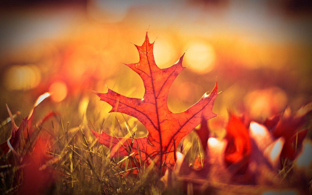 Картинки по запросу картинки 10 самых ярких красок | Трава ...