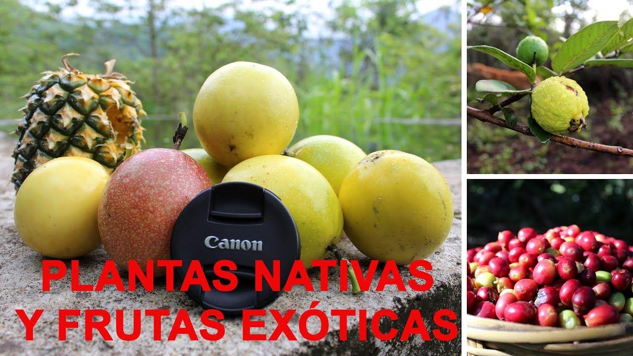 La Merced Del Potrero Plantas Nativas Y Frutas Exóticas Primera Parte Estas Son Algunas Plantas Nativas De México Plantas Nativas Frutas Exóticas Plantas
