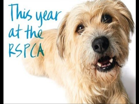 RSPCA Victoria Year in Review 2012 RSPCA Rescuing