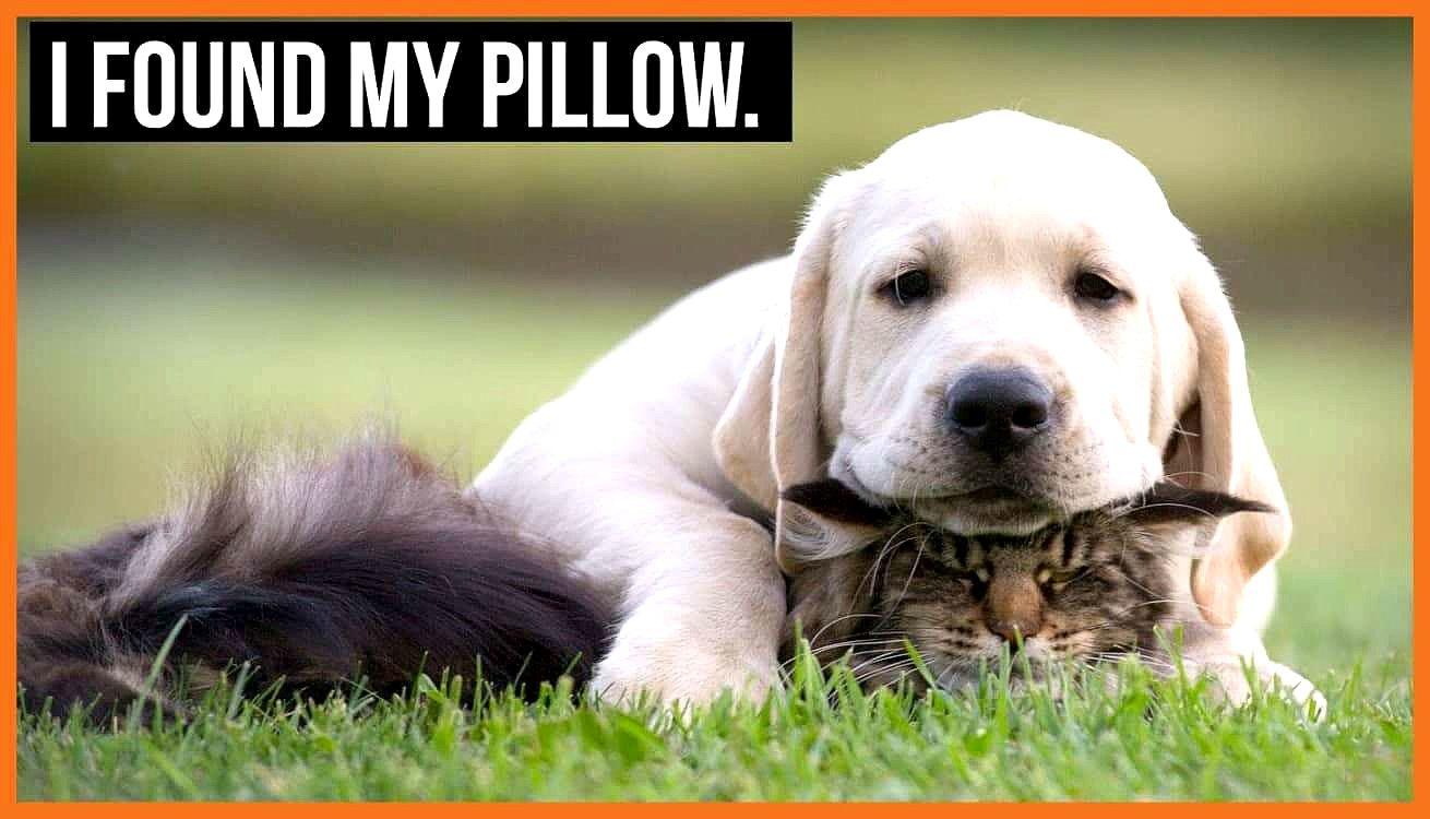 Rofl Dog Memes Team Fortress 2 Dog Meme Funny Dog Memes Dog Meme Jokes Funny Animals