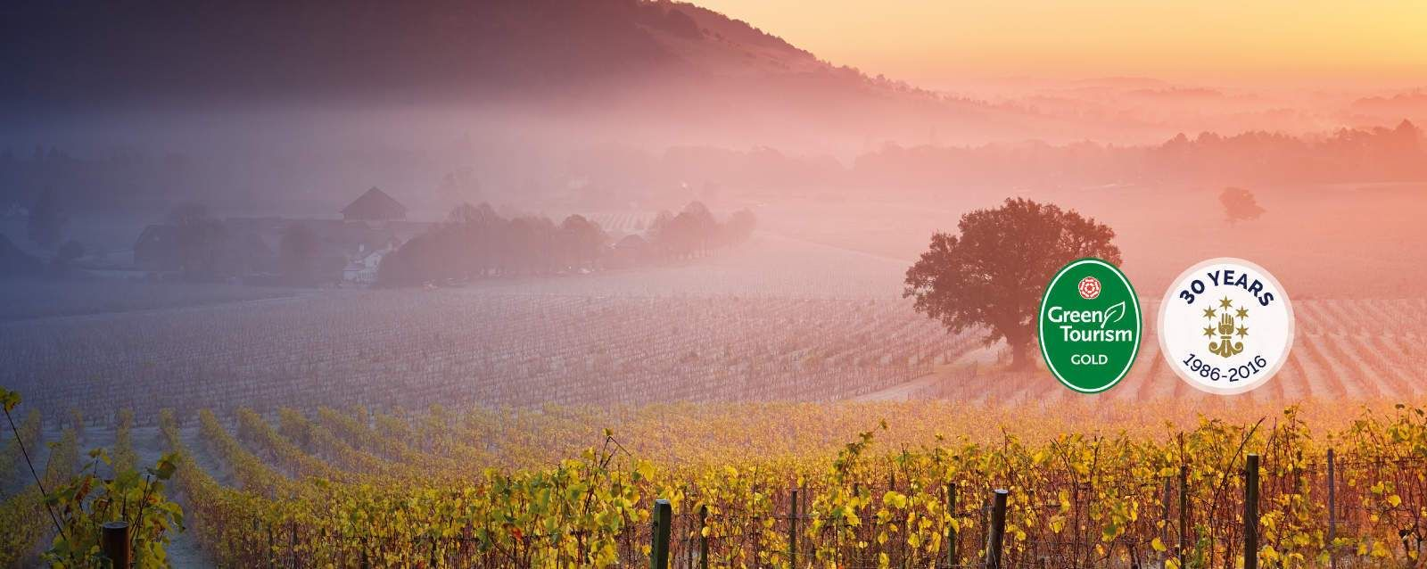Denbies vineyard in Dorking, Surrey has one of the