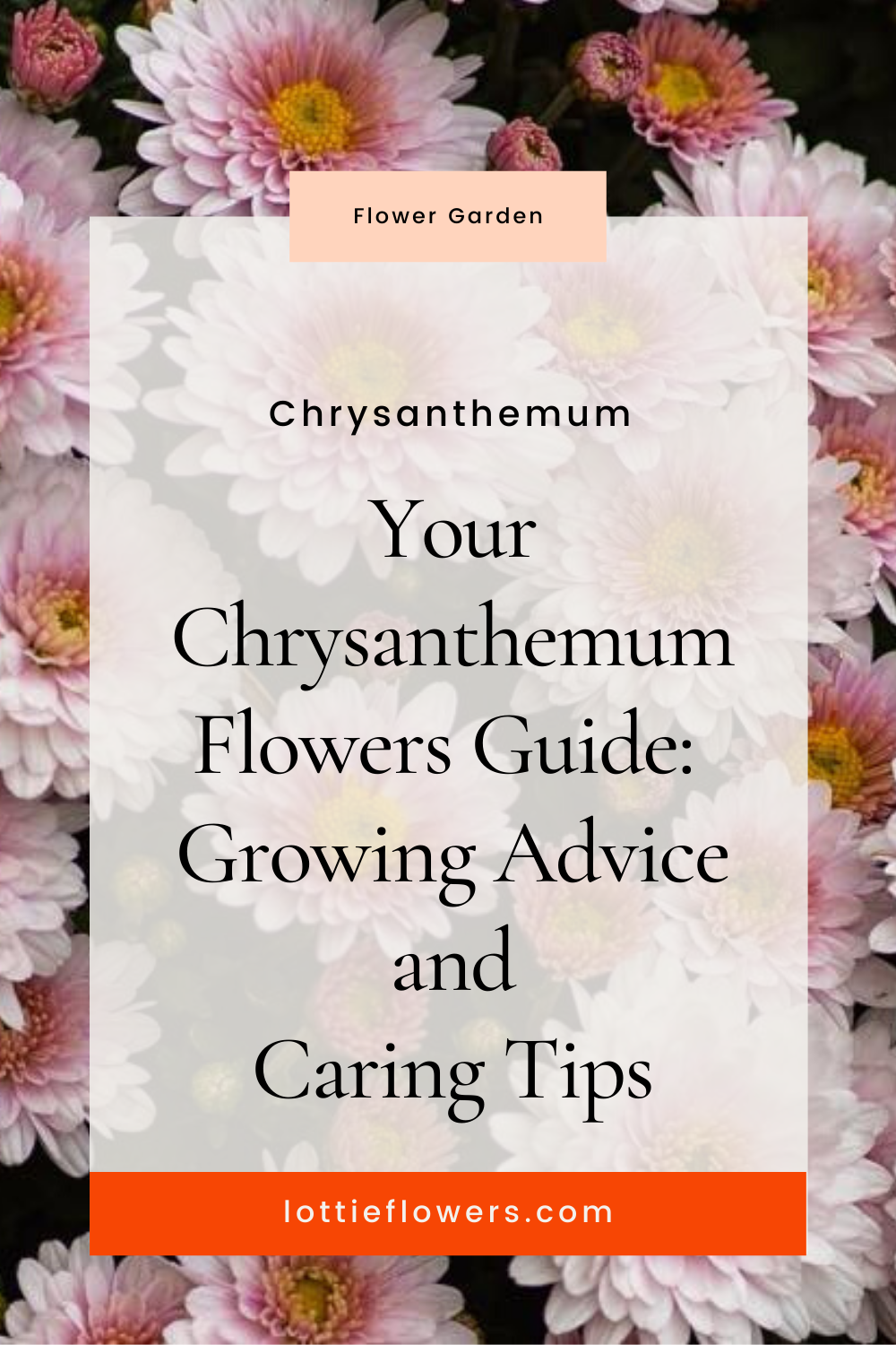 Chrysanthemum Flowers Guide Growing Advice And Caring Tips To Grow Your Own Flower Garden In 2020 Flower Guide Chrysanthemum Flower Flower Garden