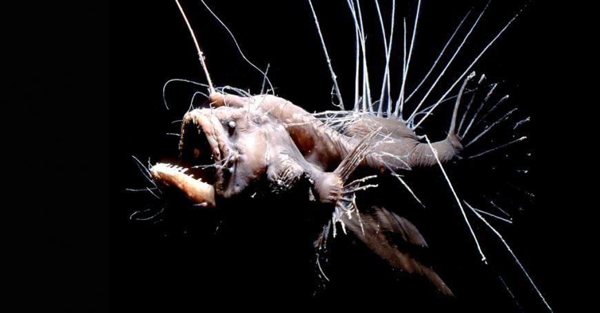 Pix for weird deep water fish whatsinyourwater weird for Deep water fish