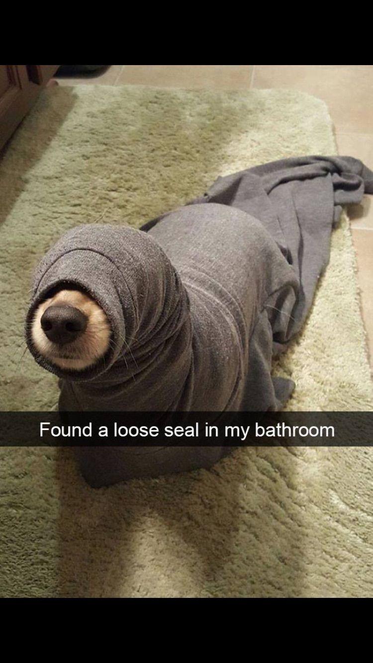 13++ Funny animal memes clean ideas