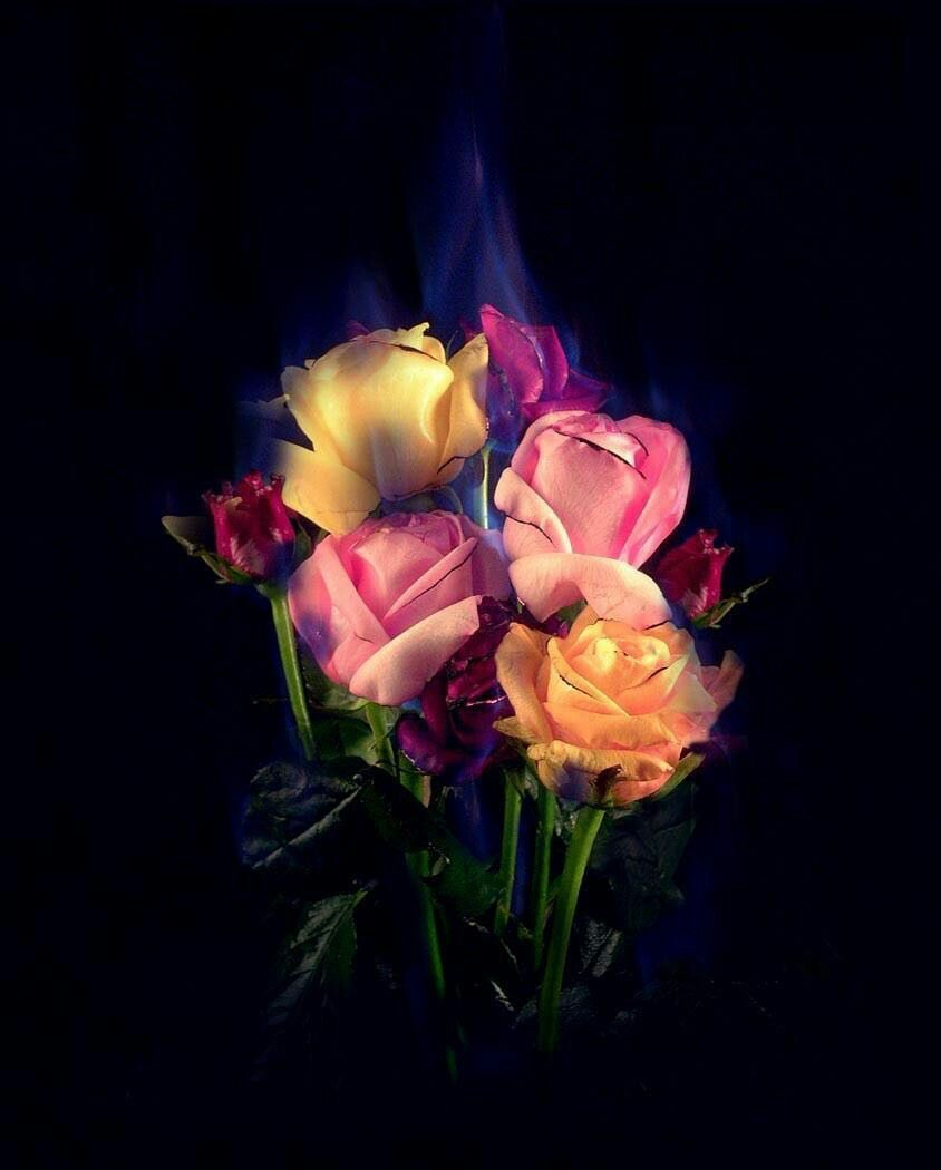 Pin by Azhar Abbas on Flowers (With images) Burning