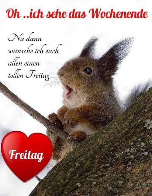 Freitag Guten Morgen Freitag Bilder Freitag Spruche Lustig Und