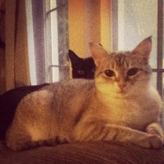 Bella Cat | Pawshake