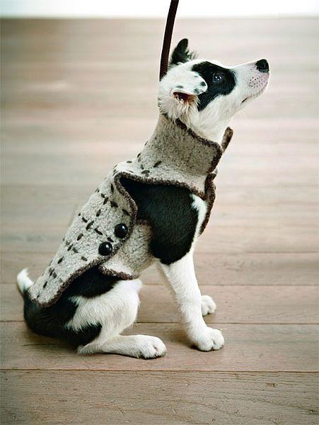 Strickfilz-Hundemantel | Dogs, Cats & Cuteness! | Pinterest ...
