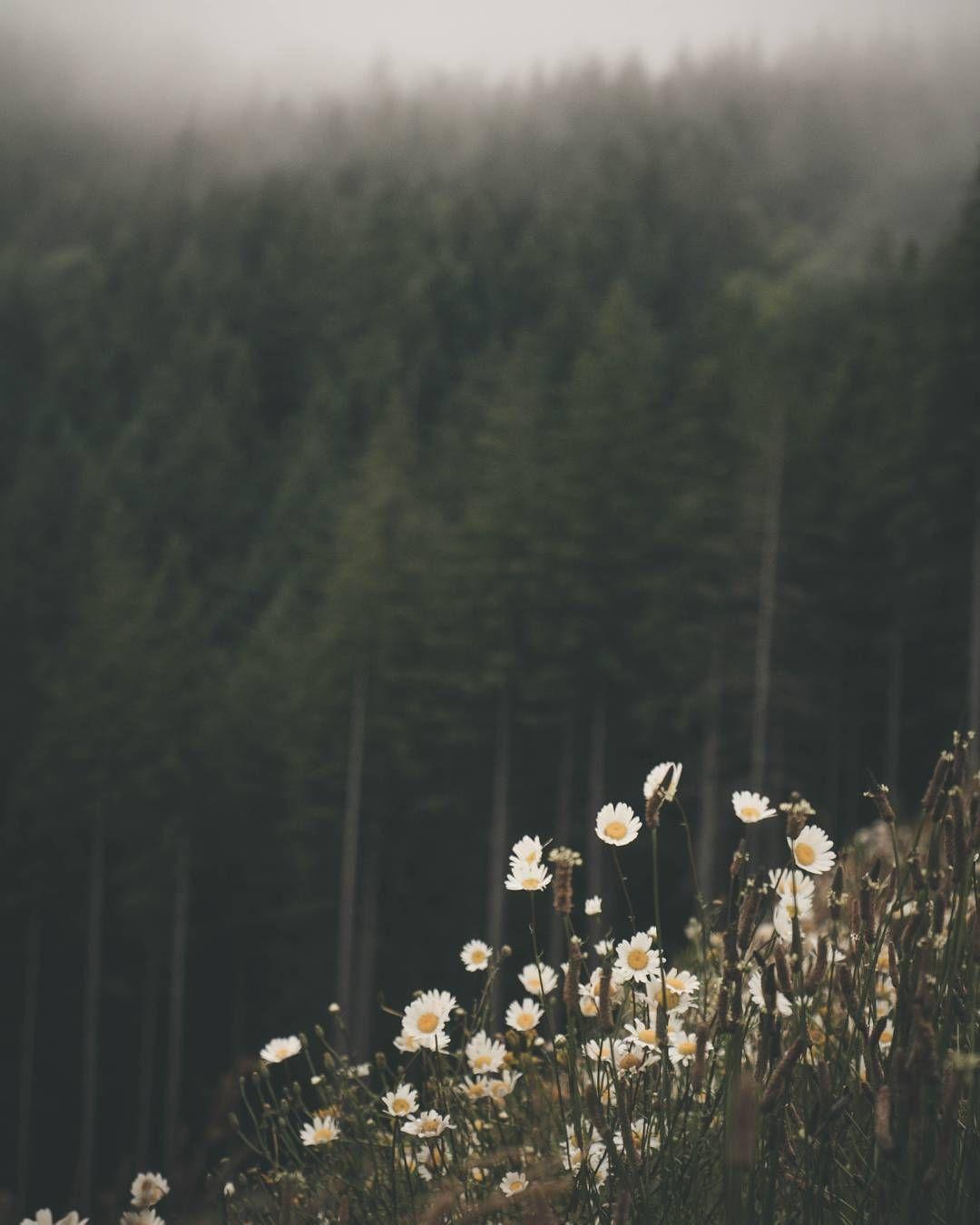 J'adore! : Foto