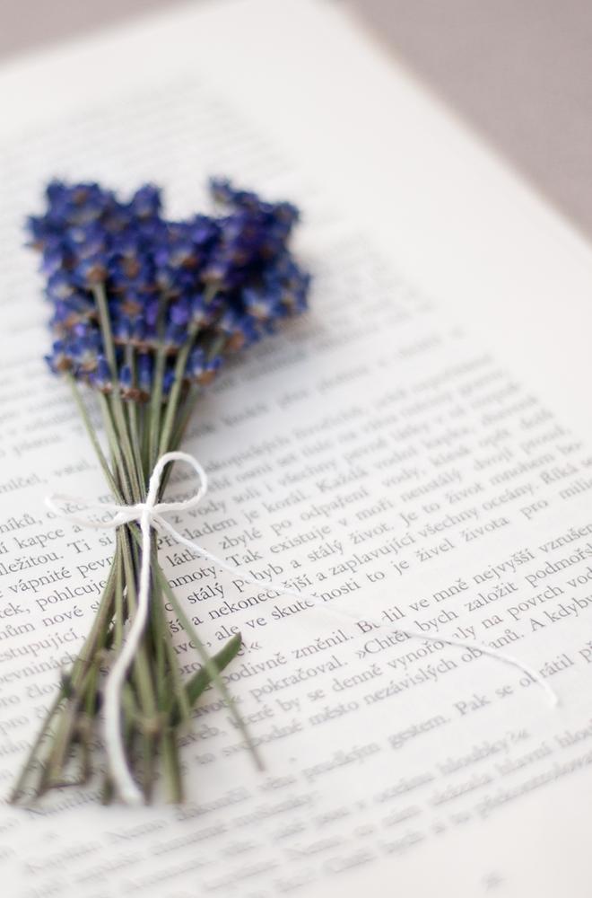 Lavender Love Lavandulena Lyubov 79 Ideas Lovely Lavender Lavender Flowers Nature