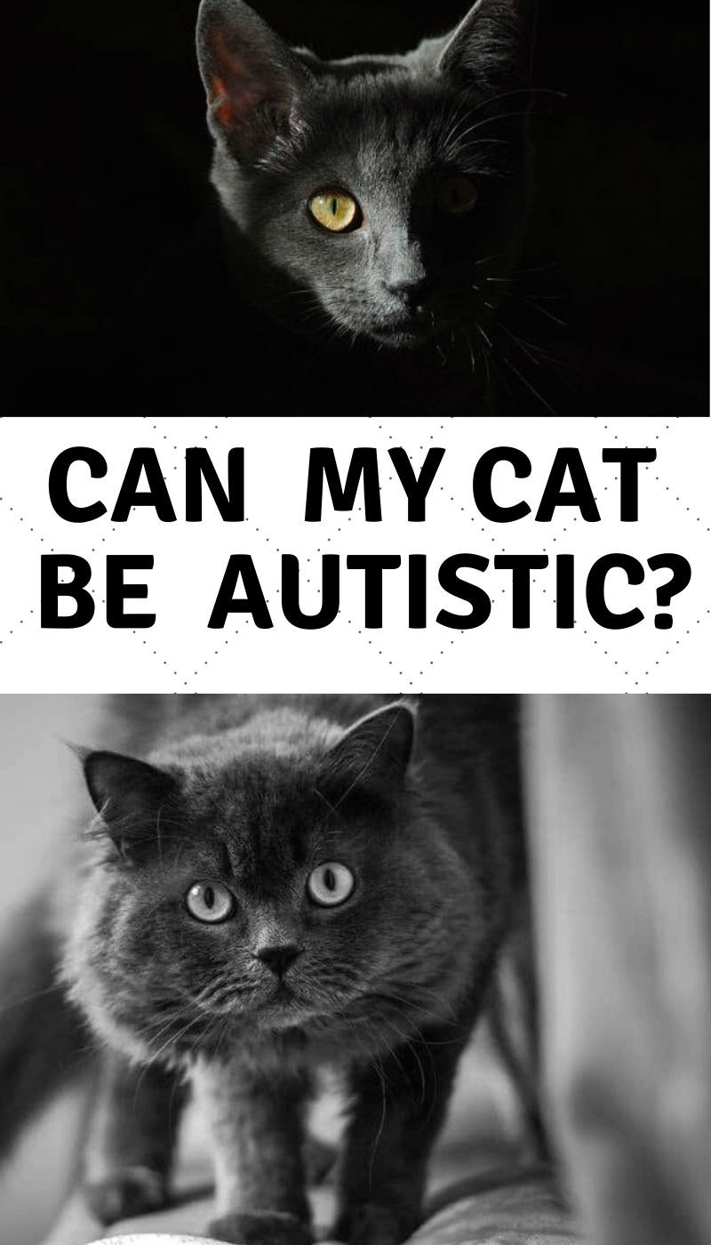 Cats and Autistic Behavior in 2020 (With images) Dogs