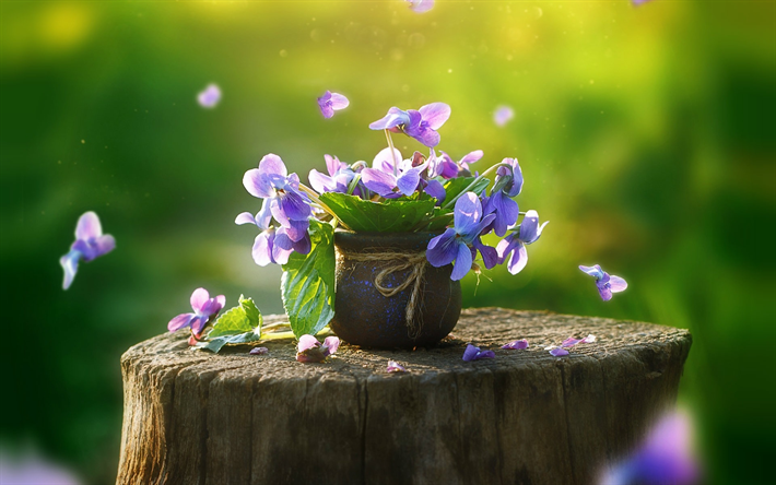 Wunderbar Herunterladen Hintergrundbild Stiefmütterchen, Lila Blüten, Frühling,  Blüte, Garten, Blume