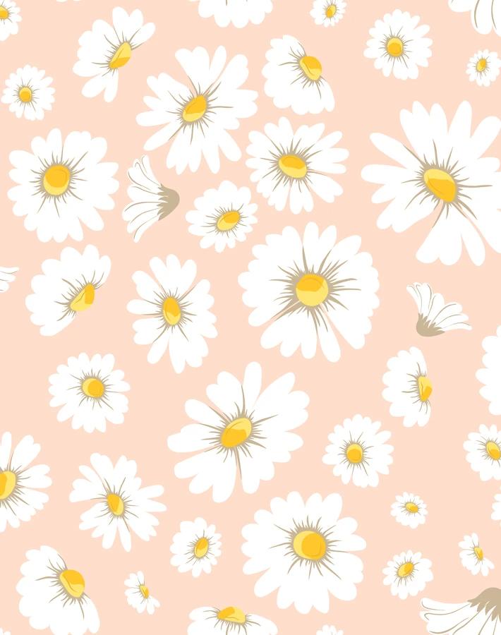 Daisy Bloom Wallpaper Peach Flower Phone Wallpaper Cute Wallpaper For Phone Baby Blue Wallpaper