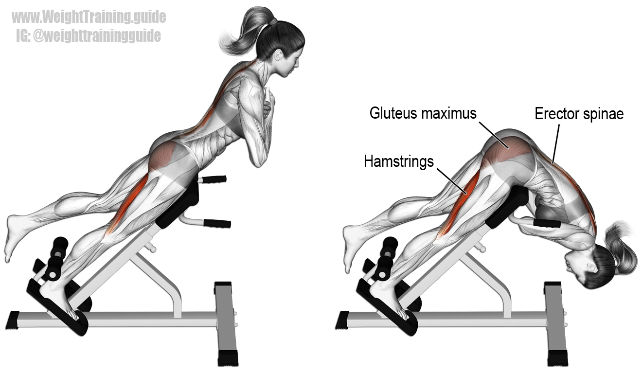 One-leg hyperextension exercise guide and video | Leg and Glute ...