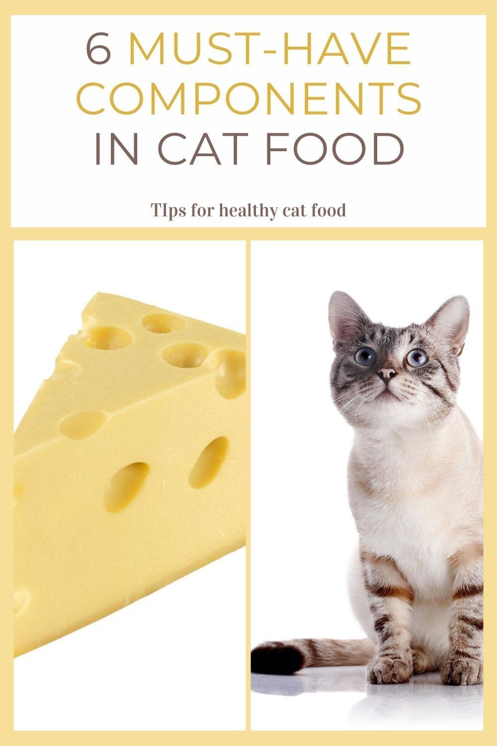 Can Cats Eat Cheese Choose The Right Cat Food In 2020 Cat Food Kitten Care Healthy Cat Food