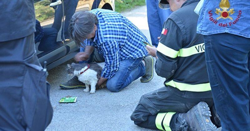 Un chat extrait vivant des décombres 32 jours après le séisme qui a frappé l'Italie  Pas plus tard que dimanche dernier, un chat a été sauvé in extremis par les services de secours de la ville d'Amatrice (Italie)…