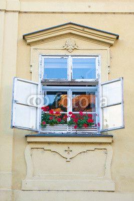 Window and flower, Prague, Czech Republic