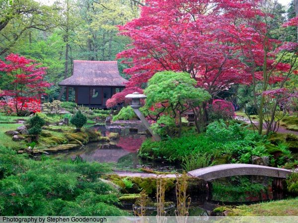 Cooling fresh air small japanese garden photos with for Japanese style plants