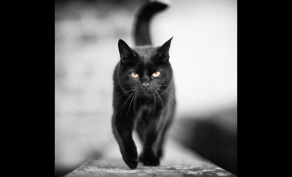 Открытках, картинки с надписями черных котов