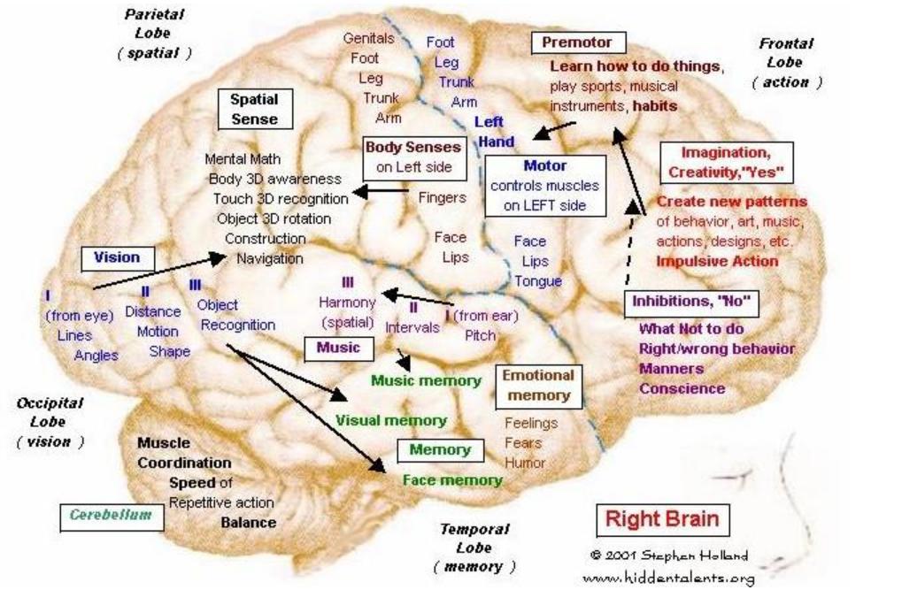 Brain,_right_hemisphere | Celestial | Pinterest
