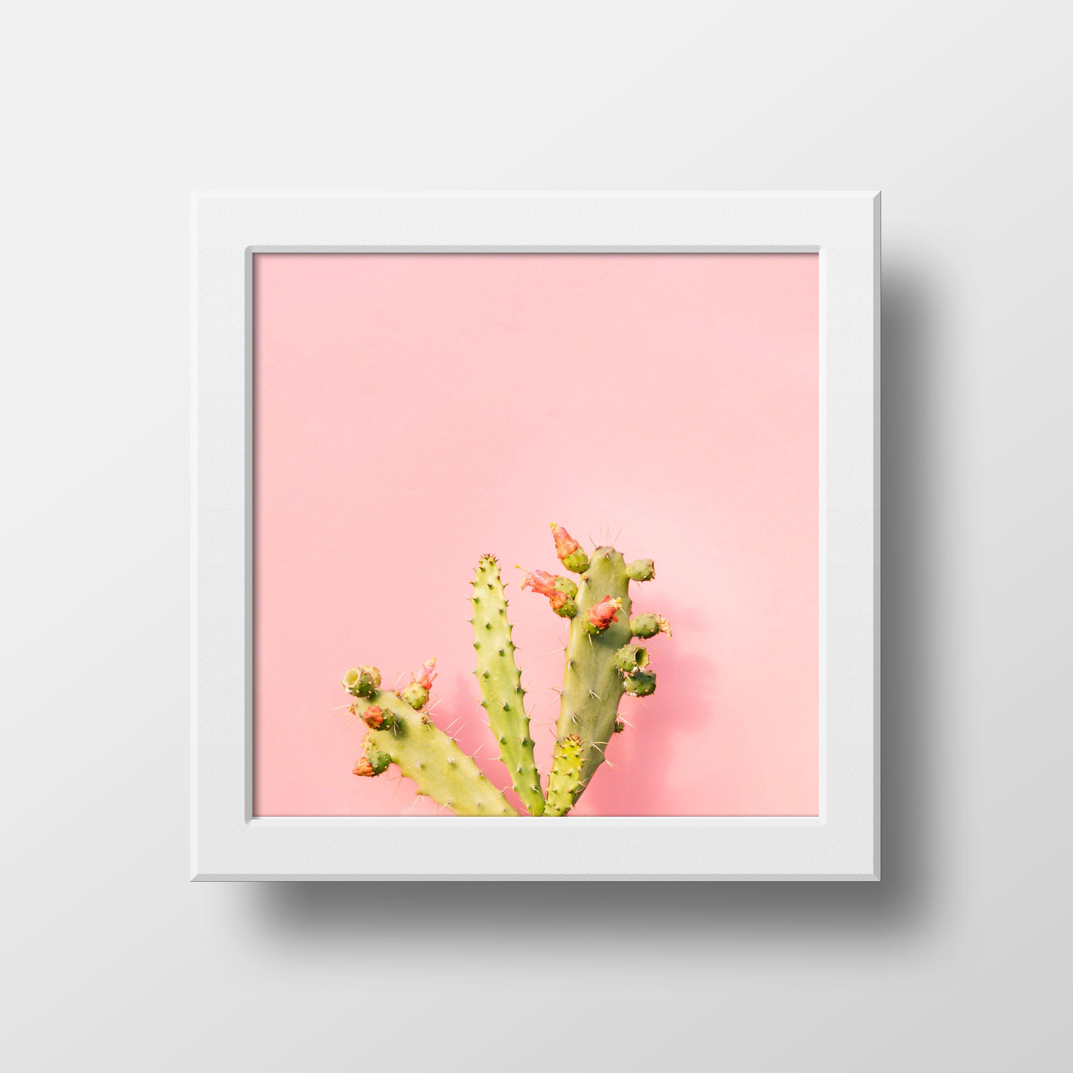 081 946 542 871 Wall Decor Kaktus Hiasan Dinding Kaktus Hiasan Dinding Poster Kaktus Poster Menggambar Kaktus Hitam Dan Putih