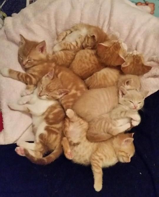8 Orphaned Kittens Found Huddled Up For Warmth Are Turned Around By Love Love Meow Kittens Ginger Kitten Cats And Kittens