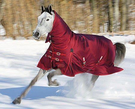 Stormcheeta 400g Winter Turnout Blanket