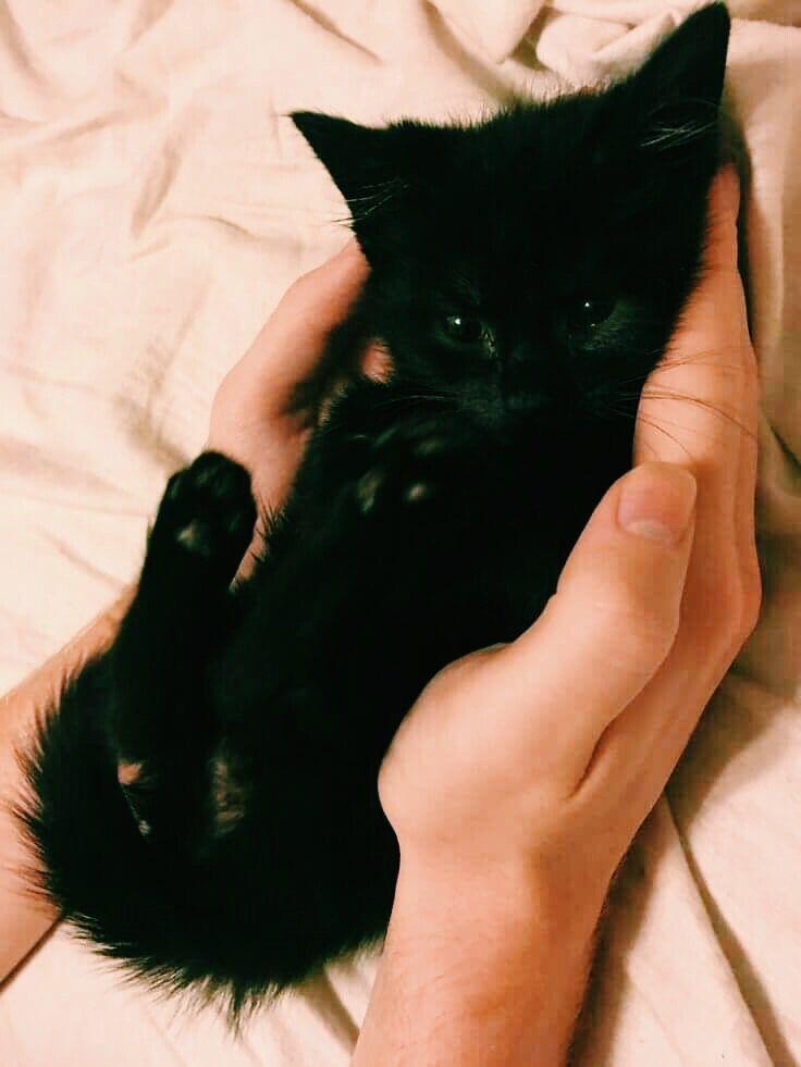 Fluffycat Kittens Cutest Cute Cats Cats And Kittens