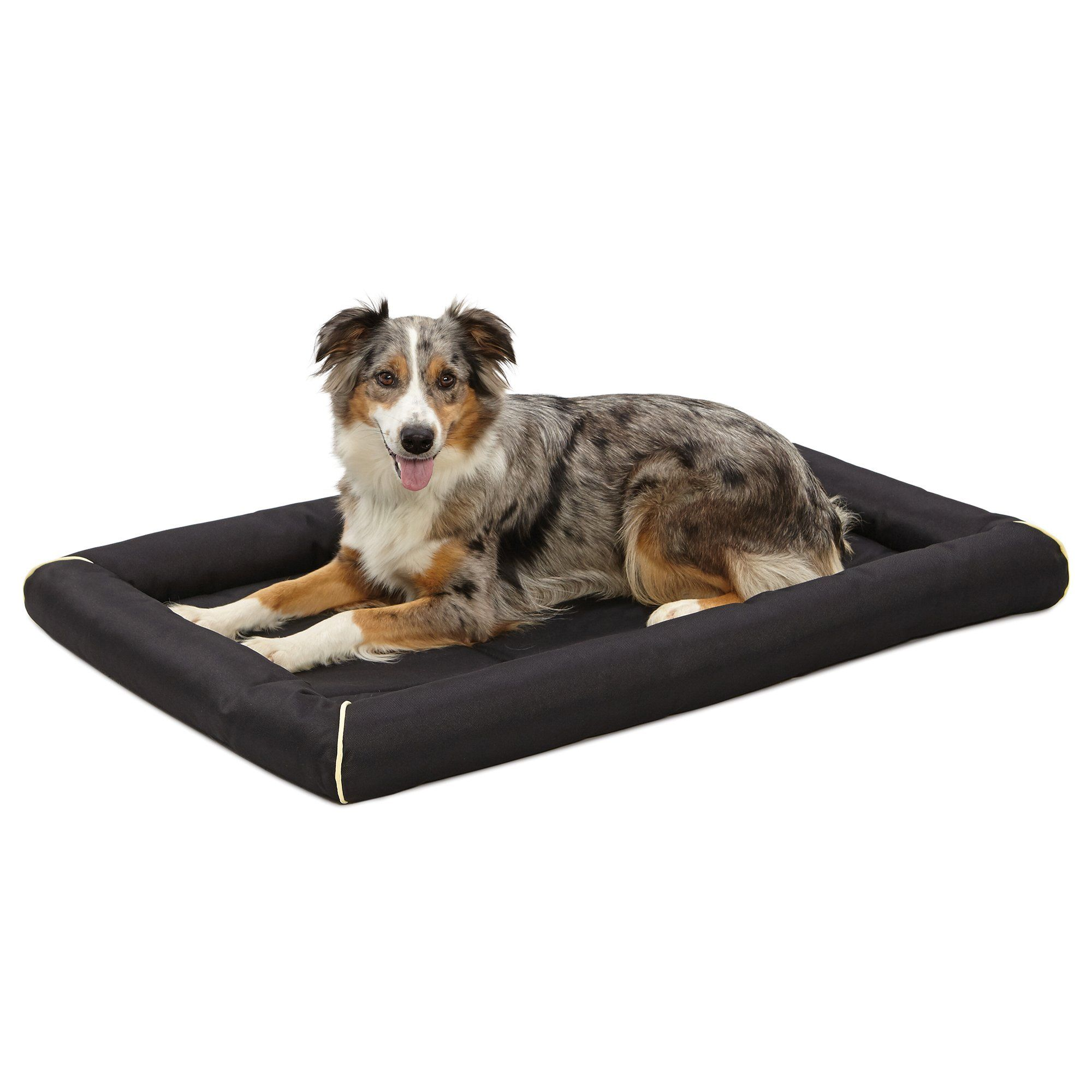 10 Best Canopy Dog Beds for Outdoor Use