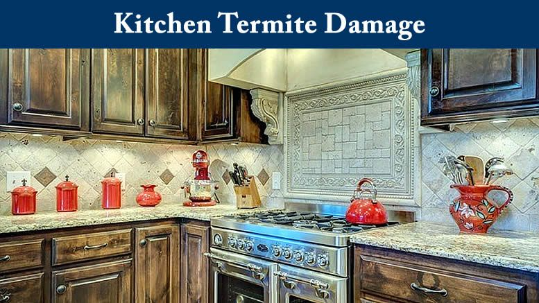 Kitchen Termite Damage Termites In My Kitchen Cabinets Kitchen Remodel Home Remodeling Contemporary Kitchen