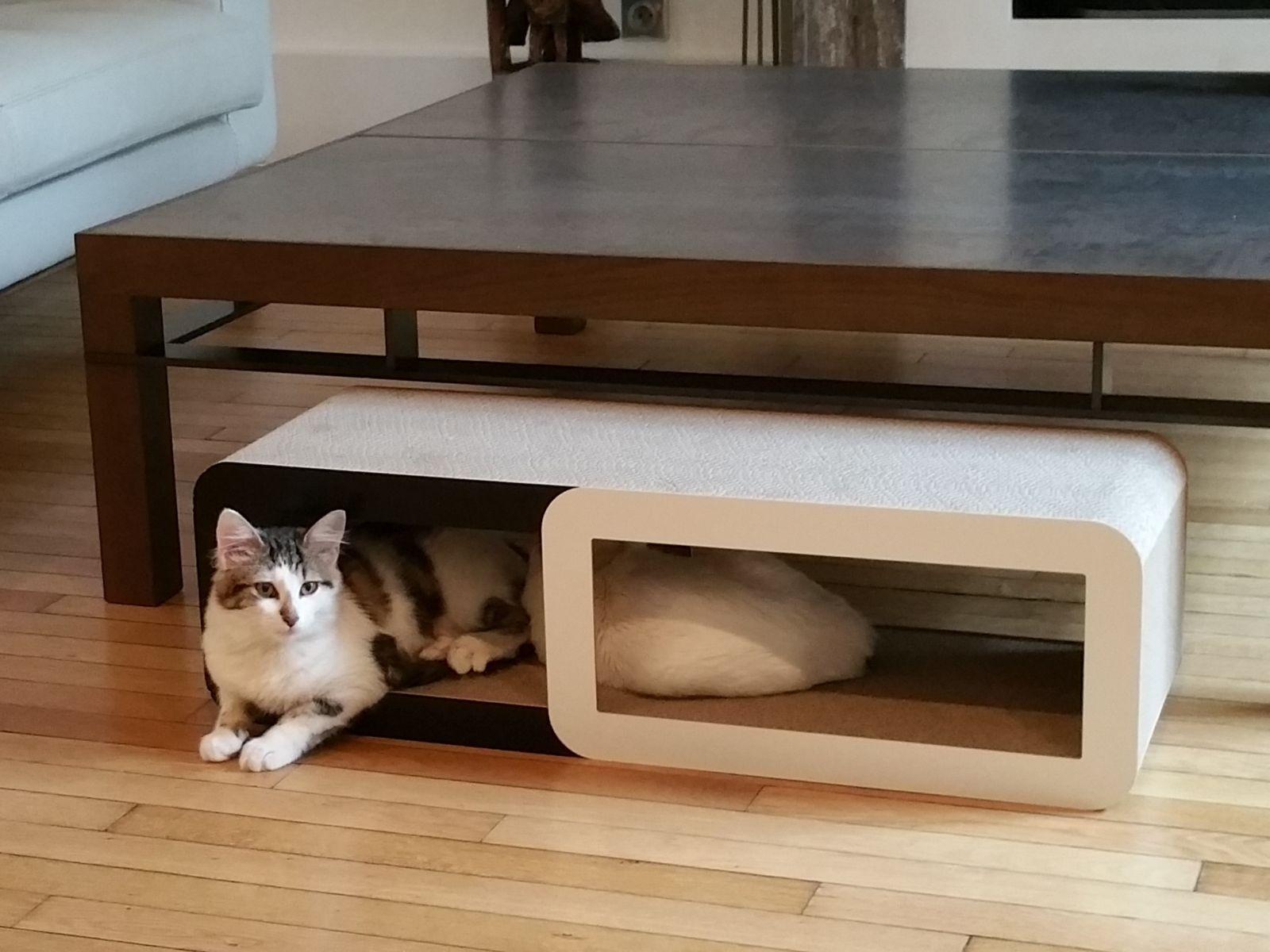 comment am nager son appartement en pensant son chat pinterest bo tes accessoire pour. Black Bedroom Furniture Sets. Home Design Ideas