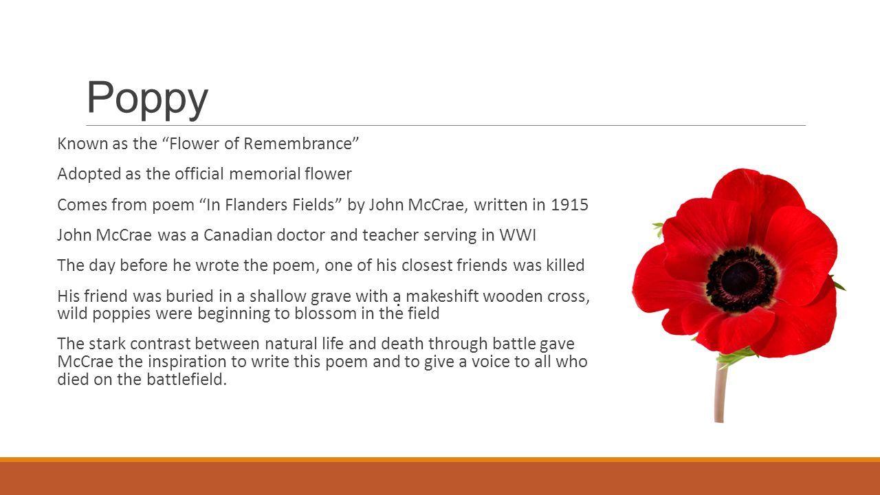 Image Result For Armistice Day Poem Poppies Dar Program Ideas