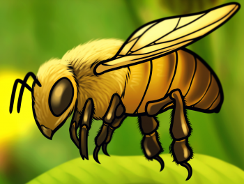 how to draw a honey bee step by step bugs animals free