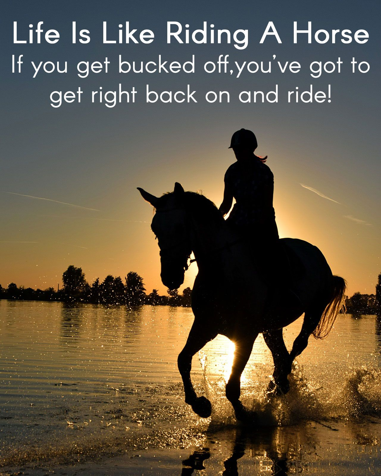 Pin by Kath L on Quotes | Pinterest | Horse, Horse humor ...