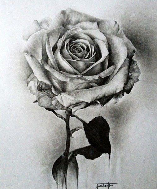 Rosen bleistiftzeichnung  flower drawings by joshbeatson | graphite | Pinterest ...