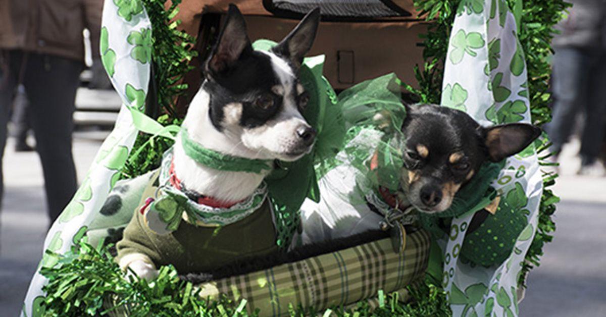2018 St Patrick's Day Parade (photos) St patricks day