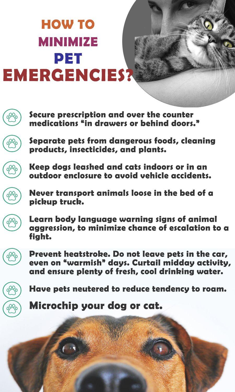 Emergency Animal Hospital Jacksonville Fl Illnesses And Poisoning Animal Hospital Pet Emergency Emergency