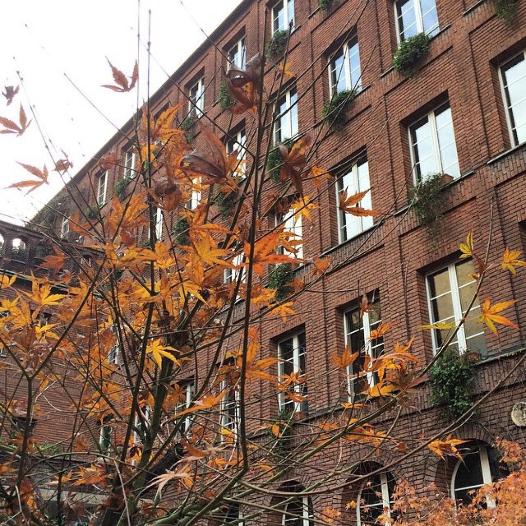 #Repost @_bettinalandscape  Autumn meets architecture #polimi #angelicum #muziomilano  1939 Convento Angelicum Via Moscova/via Bertoni  PARTECIPA a #MUZIOMILANO.  Scopri fotografa e condivisi su IG oltre 50 edifici progettati da Giovanni Muzio lungo il Novecento. Da Ca' Brütta alla Triennale. _________________________  #muziomilano è un'iniziativa di #archiviomuzio e @polimi in collaborazione con Ordine Architetti Milano @fondazionearchitettimi #casabella #AlumniPolimi. Scopri come…