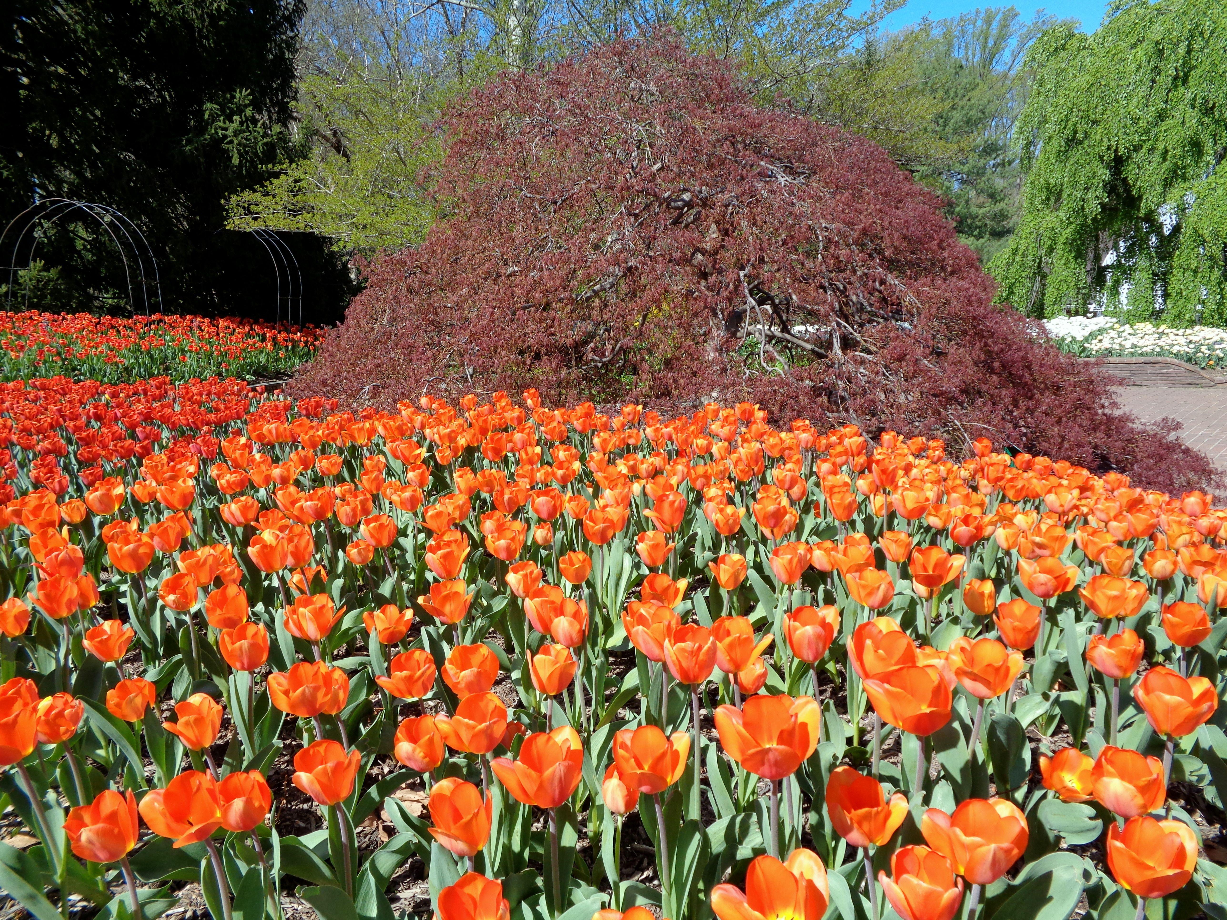 261b5008f848dee0c8713622a6561805 - Brookside Gardens Conservatory Wheaton Md 20902