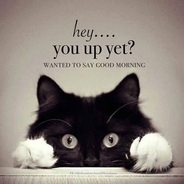 Pin By Debora Hy On Animals In 2020 Funny Good Morning Memes Good Morning Beautiful Quotes Morning Quotes Funny