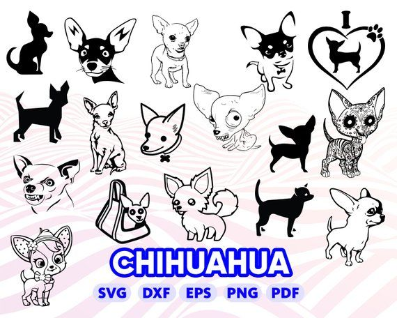 Download CHIHUAHUA SVG, dog svg, puppy svg, cartoonchihuahua, cute ...