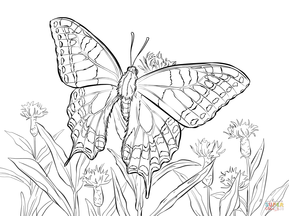 Old World Swallowtail Coloring Page Free Printable Coloring