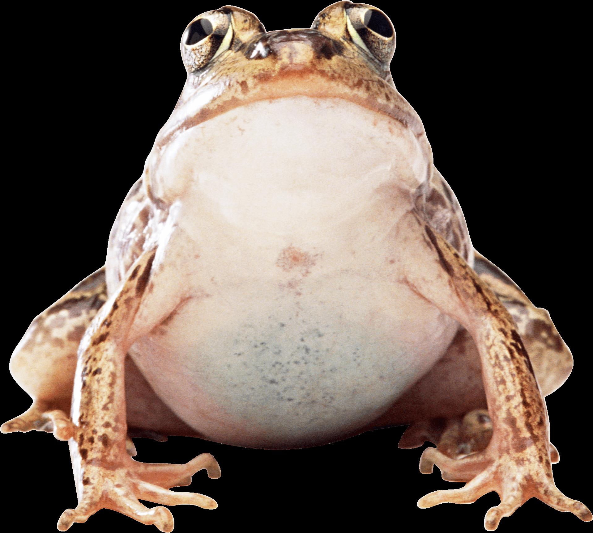 Big Frog Frog Png Images Image