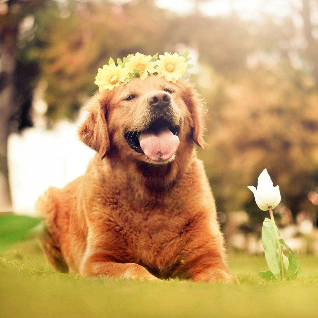 Dog Wallpaper For Ipad Mini 140807 1 Dog Background Dog Portraits Dogs