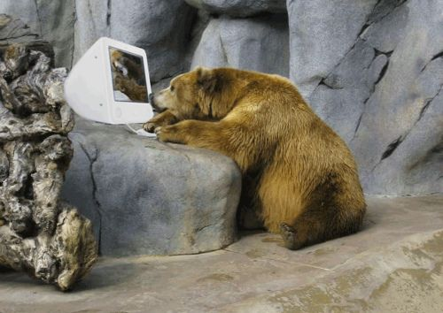 Pin by The InSource Group on Lines verden | Bear, Pet people, Bear sitting