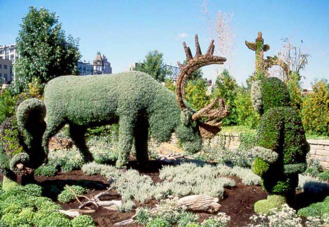 Figuras con arbustos poda ornamental o poda topiaria for Jardines con arboles y arbustos