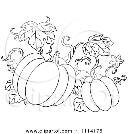 Pumpkins With Vines Picture